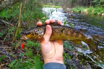 Форелевая рыбалка